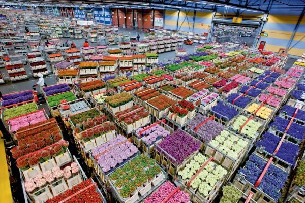 Что понадобится для цветочного бизнеса